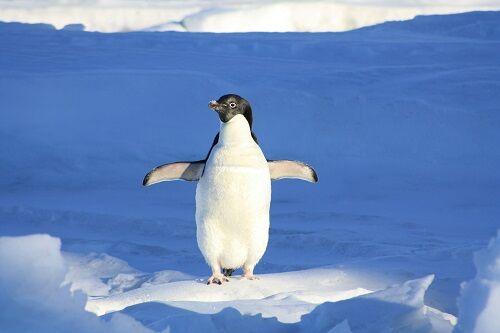 penguin-56101_1920_web